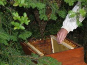 apiculture locale